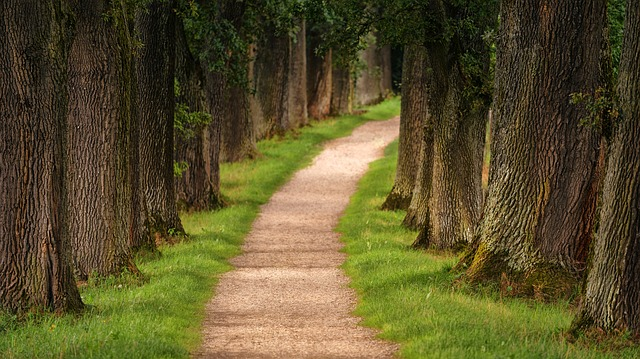 Accept That You're Walking Your Own Writing Path